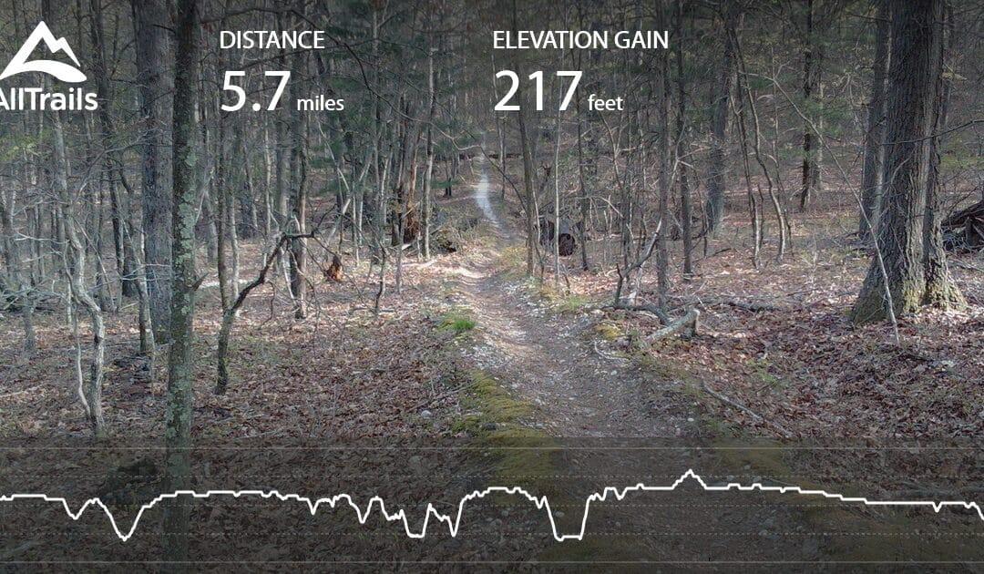 Mountain Biking Northeast Gem: Cathedral Pines