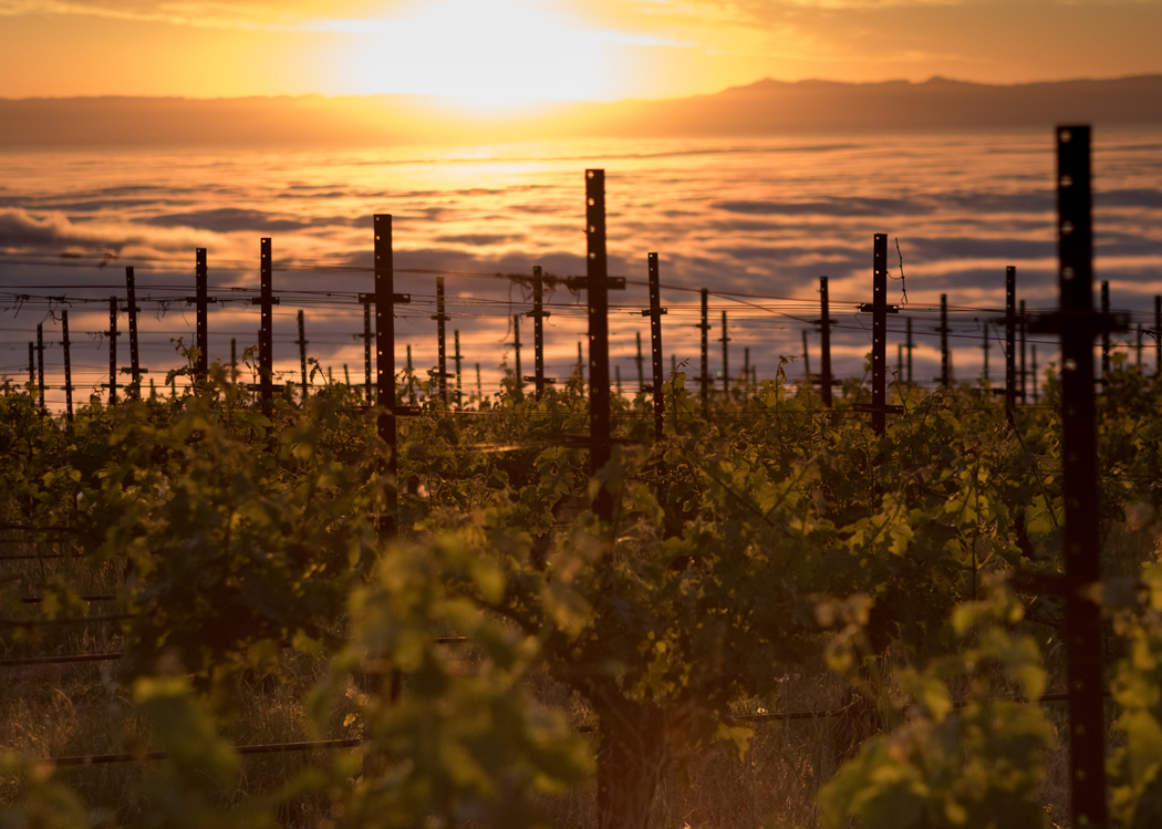 Monte Bello Road 1 - Dorcich Family Vineyard