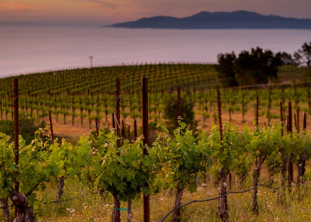 Monte Bello Road 2 - Dorcich Family Vineyard