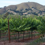 The Ranch - Dorcich Family Vineyards 3