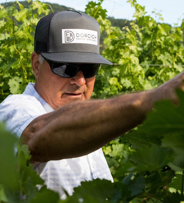 Stephen N Dorcich - winegrower - DFV