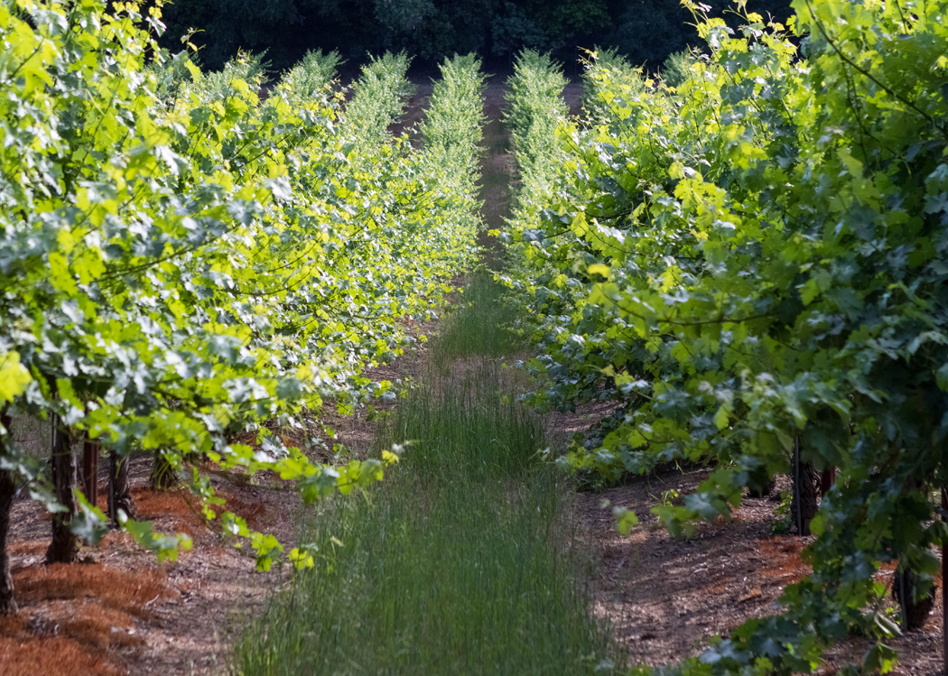 Sustainabilty 1 - Dorcich Family Vineyards