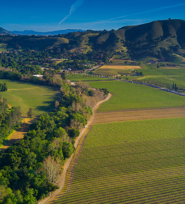 Vineyards from above DFV