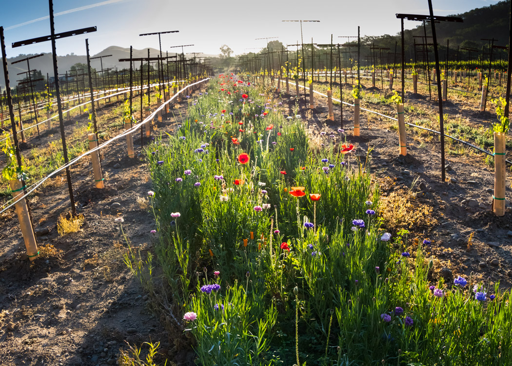 Sustainability 8 - Dorcich Family Vineyards