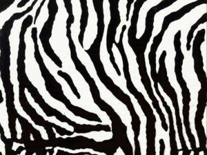 AAI-519-Zebra-Small