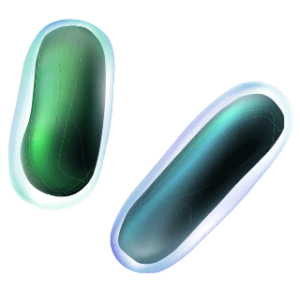 Rod-shaped bacterium which represents a Proacticin™ PA system