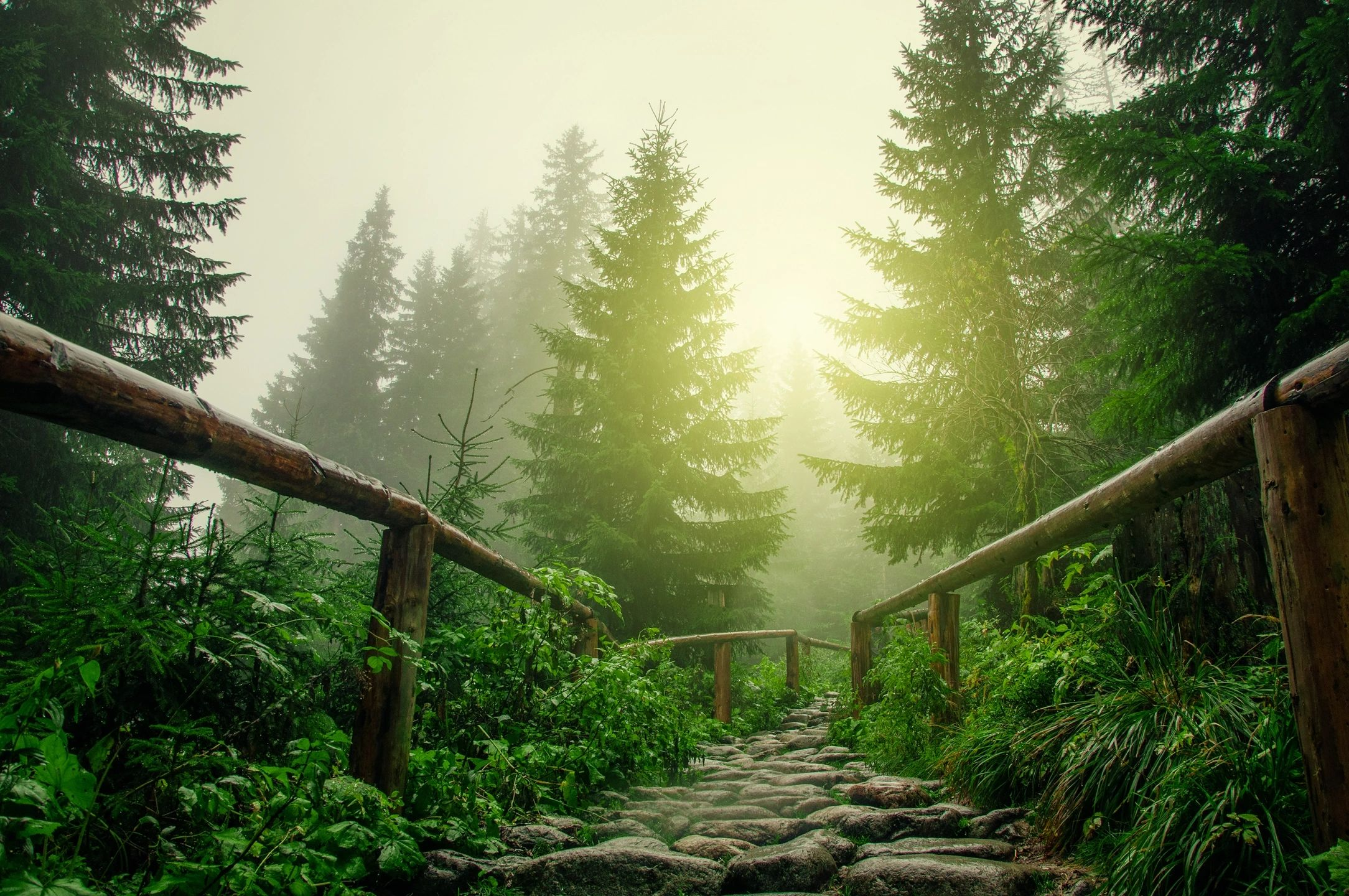 A Better Path