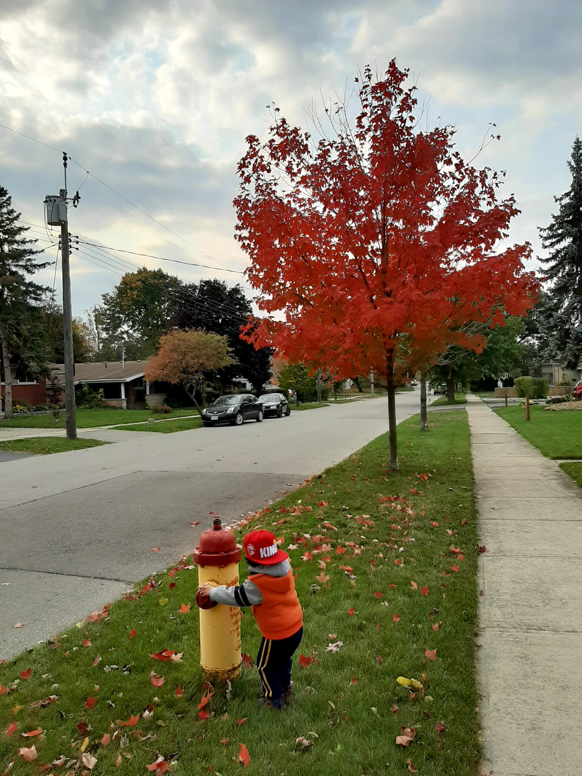 toddler playing on a fire hydrant next to a red tree