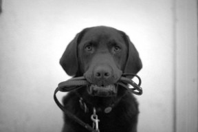 dog training for obedience