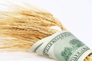 Wheat Wrapped In Money