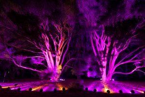 Photo credit: The Morton Arboretum