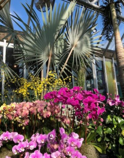 Chicago botanic Garden Orchid show focuses on color. (J Jacobs photo)