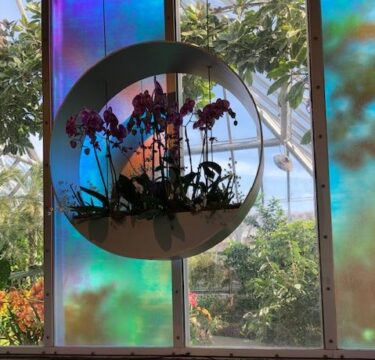 The Chicago Botanic Garden features color and form in its 2020