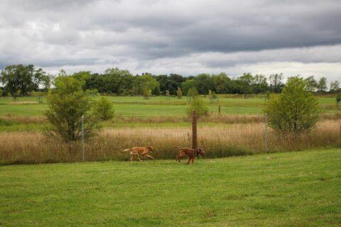 Waukegan Savannah Dog P:ark (Photo courtesy of Lake County Forest Preserves)