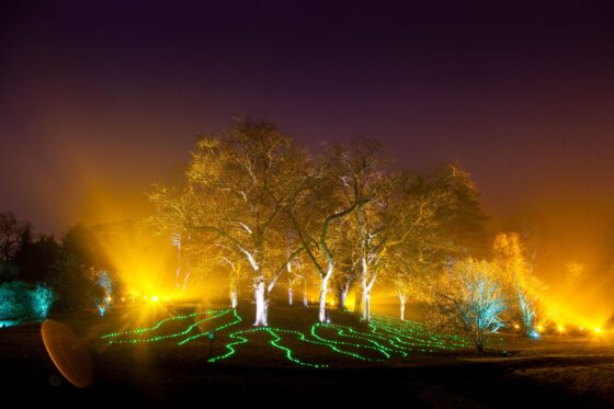 Symphony Woods and Woodland Wonder are among the two popular music and movement designs to return to the Morton Arboretum Illumination event in 2020. (Morton Arboretum photo)