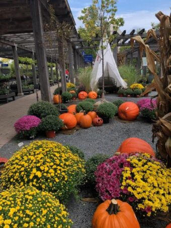 Chalet Nursery decorates for fall. (J Jacobs photo)