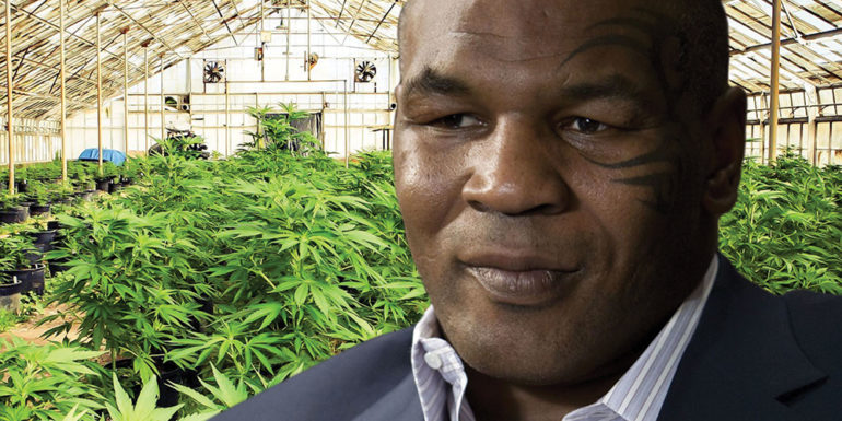 mike tyson weed