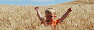 harvest_banner