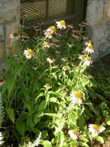 Native Plant Garden Photos