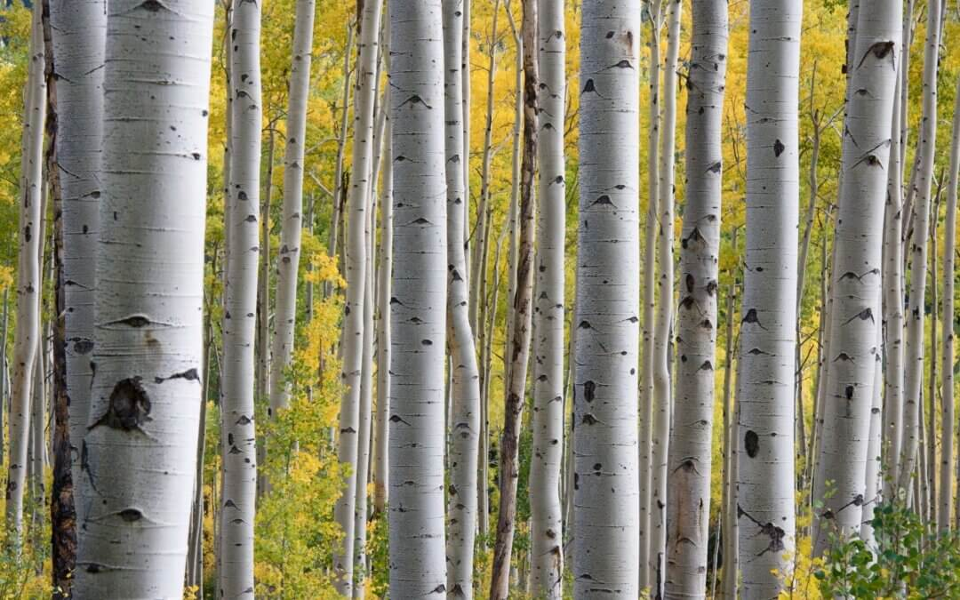 Forest Bathing: Simple Practices, Profound Benefits