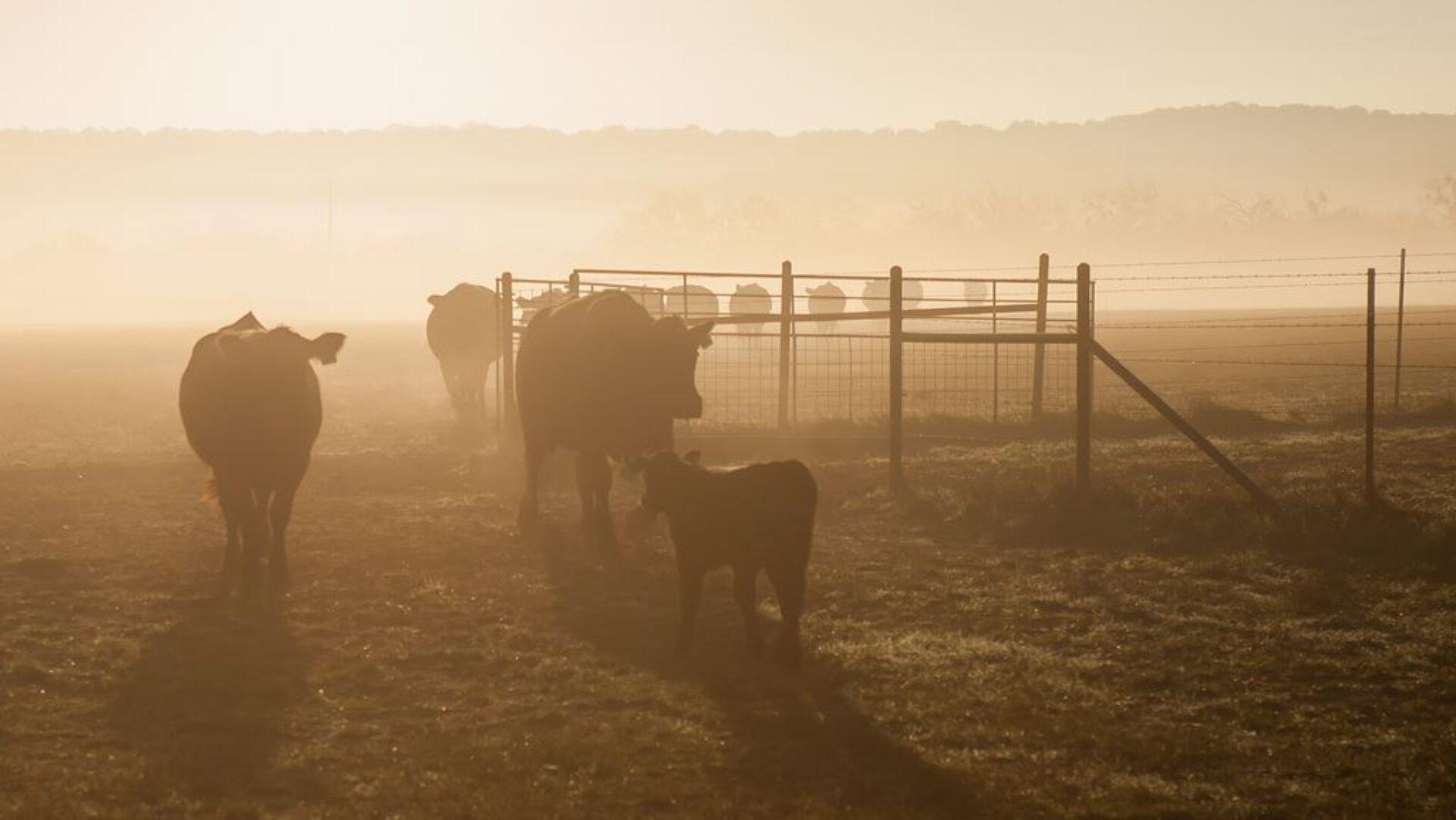 Crosswind Ranch