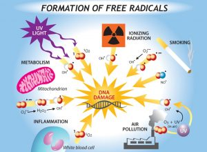 Antioxidants Role in Health – Part 1: The Need