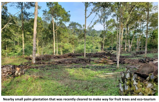 cleared palm plantation
