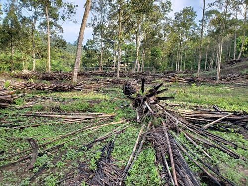 area cleared og palm oil trees