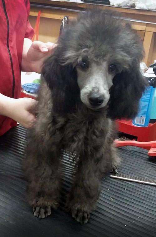 Bobbi - sweet puppy for sale