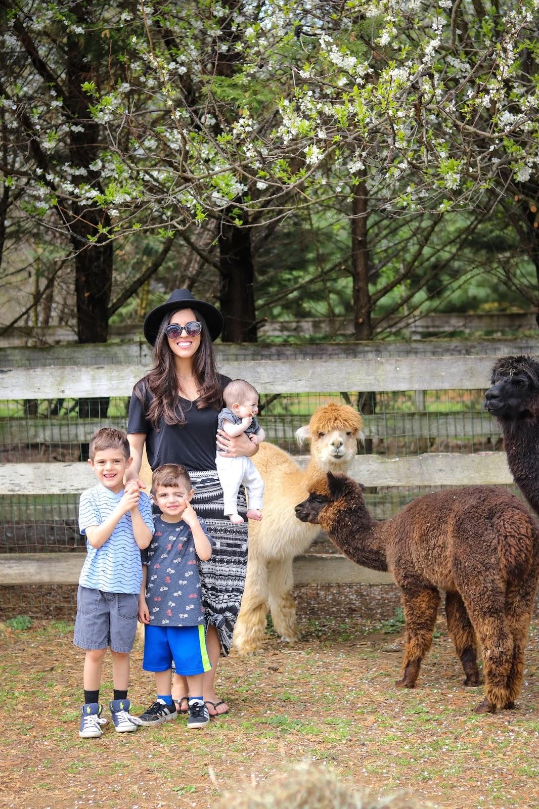 Alpaca-farm-visit