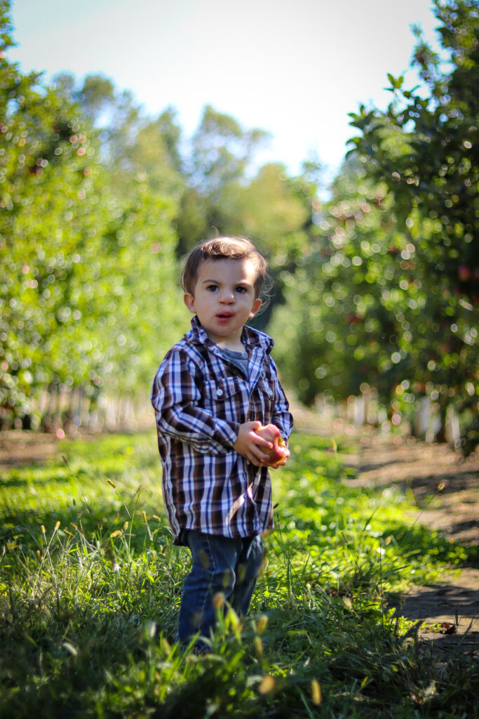 apple_orchard_pictures