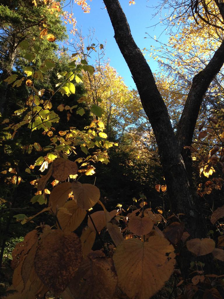 Autumn leaves on Mount Kearsarge, New Hampshire. Photo © Ben Young Landis.