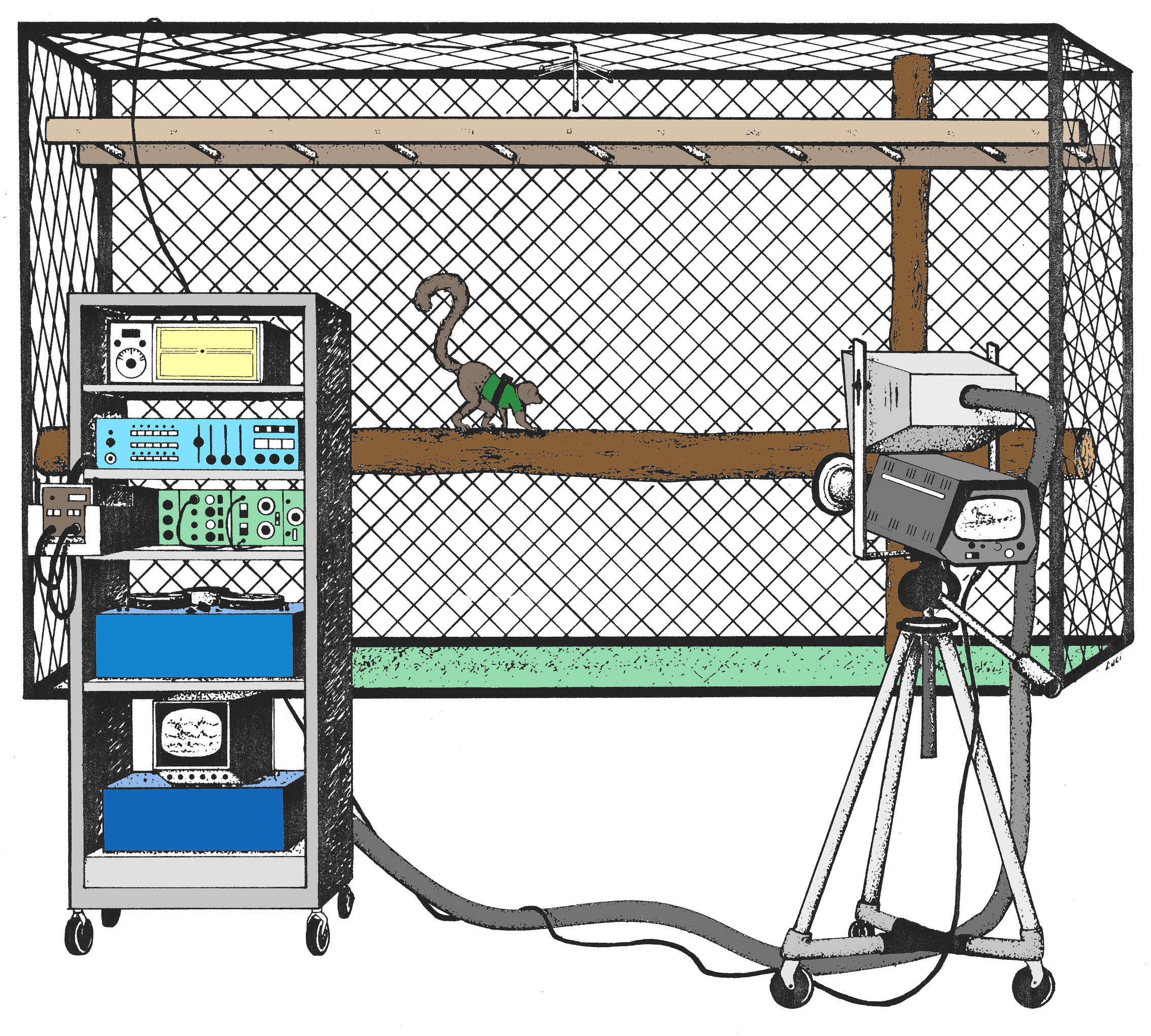 Schematic of Stony Brook Primate Locomotion Lab EMG recording set-up. Illustration by Luci Betti-Nash, nd