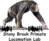 Chimpanzee Bipedalism Project Logo