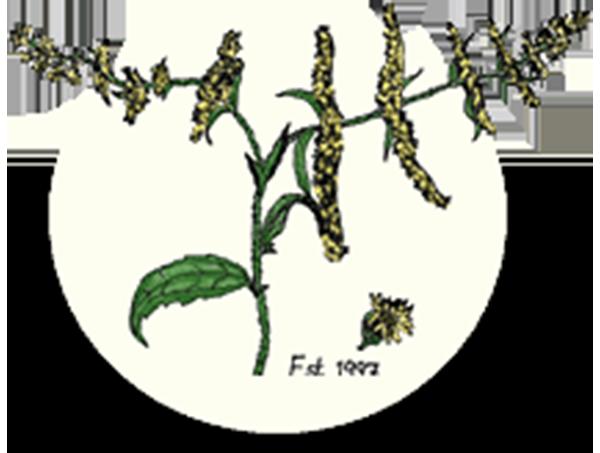 Finger Lakes Native Plant Society Logo