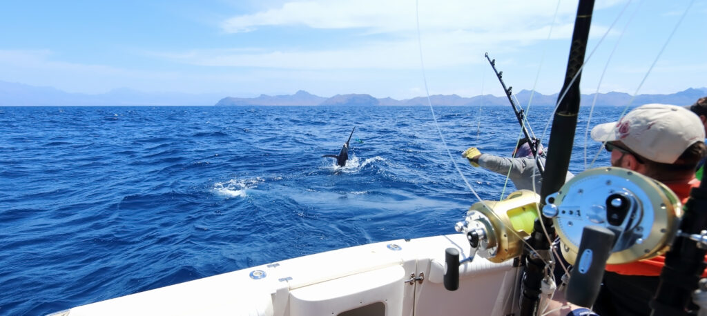 Inshore Saltwater Fishing Rods