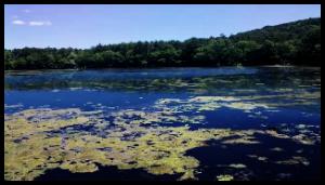 organic solutions for algae problems