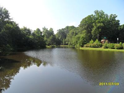 Algae reduction in pond