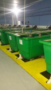 Ammonia removal for fish farming