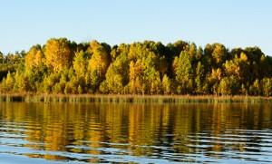 Organic Solutions for Pond/lake Algae problems