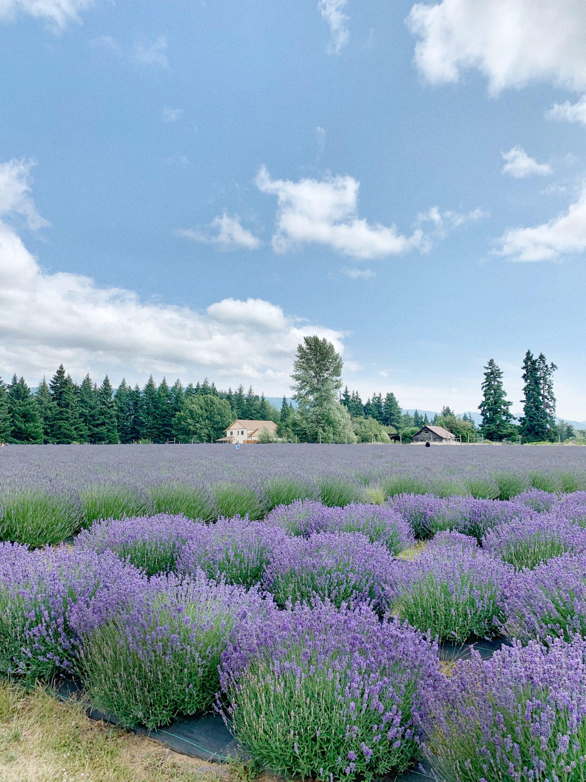 Lavender Valley Portland