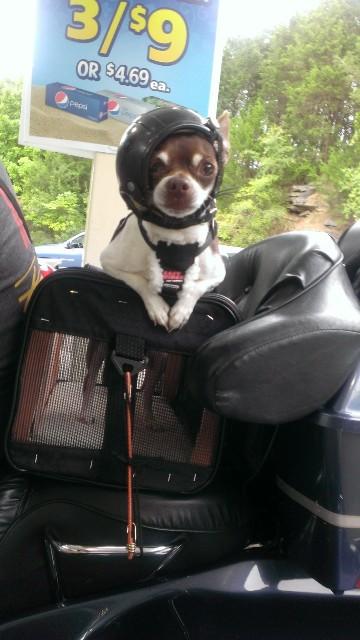 Motorcycle Guard Dog