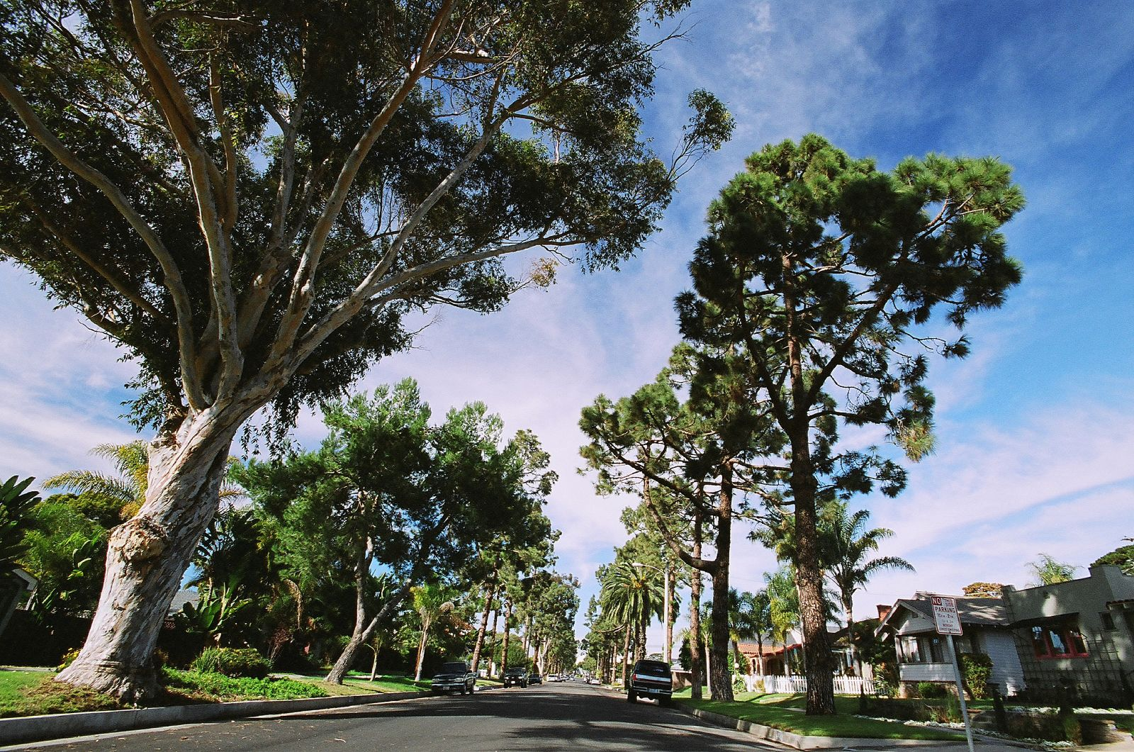Sustainability Demystified: The Value of Trees