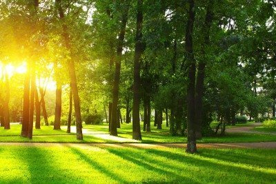 Can you imagine a great neighborhood without trees?