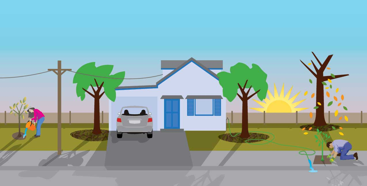 Tips to help your trees survive the drought