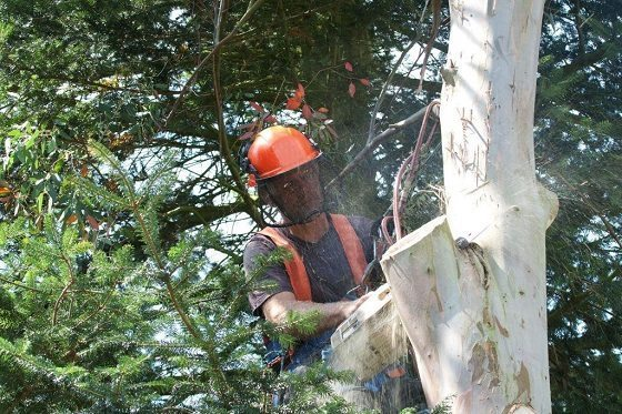 How to Hire a Certified Arborist…and Why!