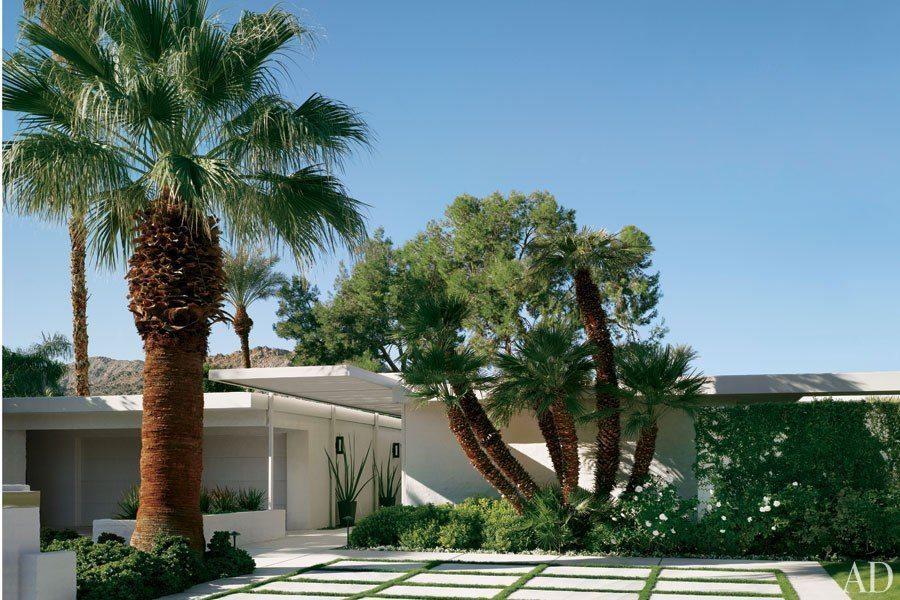 Trees in the desert