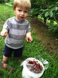 kid picking cherry