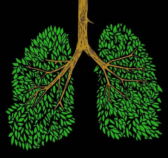 Trees help you breath