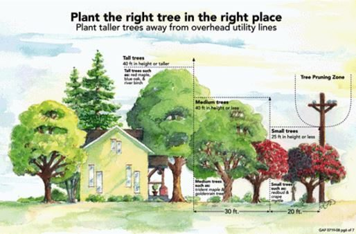 Five Tips for selecting the right tree for the right place